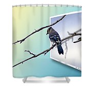 Blue Jay Branch Shower Curtain