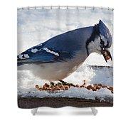 Blue Jay Chow-down Shower Curtain