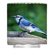 Blue Jay In Backyard Feeder Shower Curtain