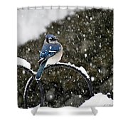 Blue Jay In Snow Storm Shower Curtain