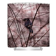 Blue Jay In The Willow Shower Curtain