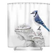 Blue Jay On An Angel Shower Curtain