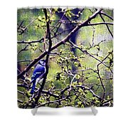 Blue Jay - Paint Effect Shower Curtain