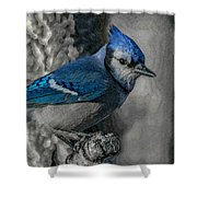 Blue Jay Painterly Shower Curtain