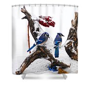 Blue Jays In Winter Shower Curtain