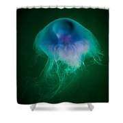 Blue Jelly Series 4 Shower Curtain
