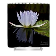 Blue Lily 4461 Shower Curtain