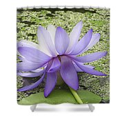Blue Lotus Seen From Behind Shower Curtain