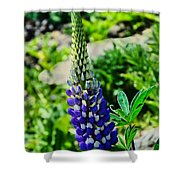 Blue Lupins Shower Curtain