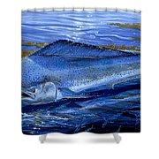 Blue Mahi Off0071 Shower Curtain