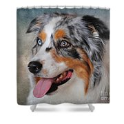 Blue Merle Australian Shepherd Shower Curtain