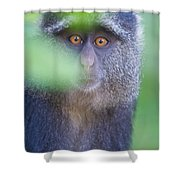 Blue Monkey Cercopithecus Mitis, Lake Shower Curtain