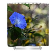 Blue Morning Glories Shower Curtain by Linda Unger