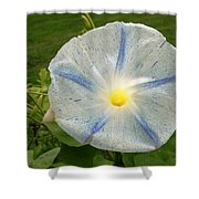 Spectacular Blue Morning Glory Shower Curtain