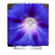 Blue Morning Glory Shower Curtain