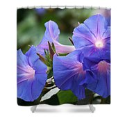 Blue Morning Glory Wildflowers - Convolvulaceae Shower Curtain
