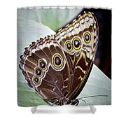 Blue Morpho Butterfly Costa Rica Shower Curtain