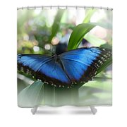 Blue Morpho Butterfly Dsc00575 Shower Curtain