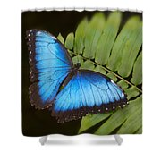 Blue Morpho Butterfly On Fren Dsc00441 Shower Curtain