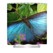 Blue Morpho Shower Curtain