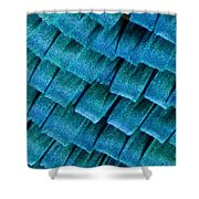 Blue Morpho Wing Scales Shower Curtain