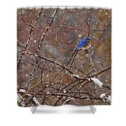 Blue Norther Shower Curtain