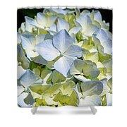 Blue Pastel Floral Art Prints Hydrangea Flowers Shower Curtain