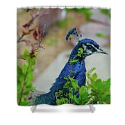 Blue Peacock Green Plants Shower Curtain