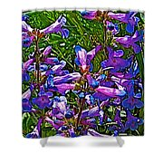 Blue Penstemon On Bald Mountain In Ketchum-idaho Shower Curtain