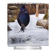 Blue Pheasant  Shower Curtain