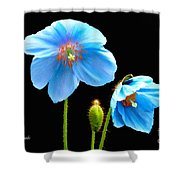Blue Poppy Flowers # 4 Shower Curtain