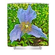 Blue Poppy In Les Jardins De Metis Or Reford Gardens Near Grand-metis-quebec Shower Curtain