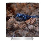 Blue Racer Snake Shower Curtain