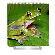 Blue-sided Tree Frog Shower Curtain