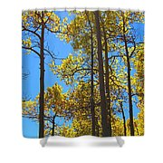 Blue Skies And Golden Aspen Trees Shower Curtain