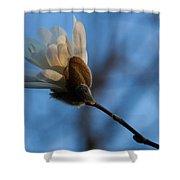 Blue Sky Magnolia Blossom - Dreaming Of Spring Shower Curtain
