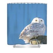 Blue Sky Snowy Shower Curtain