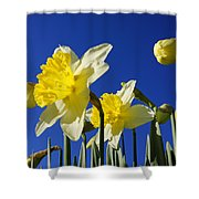 Blue Sky Spring Bright Daffodils Flowers Shower Curtain