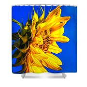 Blue Sky Sunshine Sunflower Shower Curtain