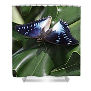 Blue-spotted Charaxes Butterfly #2 Shower Curtain