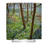 Blue Spring Flowers In Forest Shower Curtain