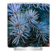 Blue Spruce Shower Curtain