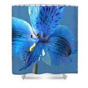 Blue Summer Shower Curtain