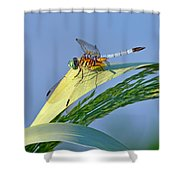 Blue Tail Dragonfly On Navarre Beach Shower Curtain