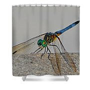 Blue Tail Dragonfly On Navarre Beach2 Shower Curtain