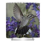 Blue-throated Hummingbird Shower Curtain