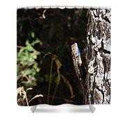 Blue Throated Lizard 1 Shower Curtain