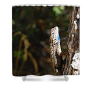 Blue Throated Lizard 2 Shower Curtain