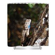 Blue Throated Lizard 4 Shower Curtain