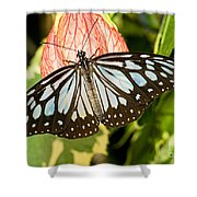 Blue Tiger Butterfly Shower Curtain